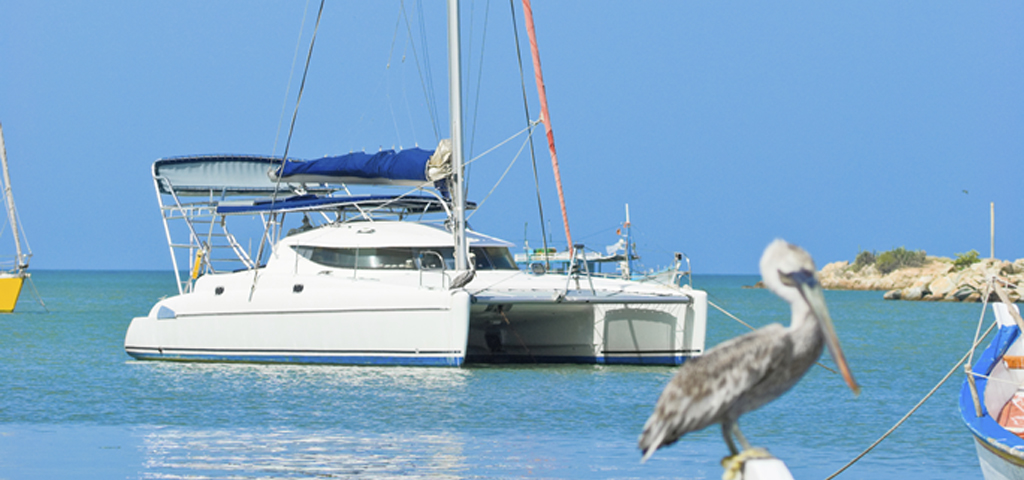 Catamaran and Pelican